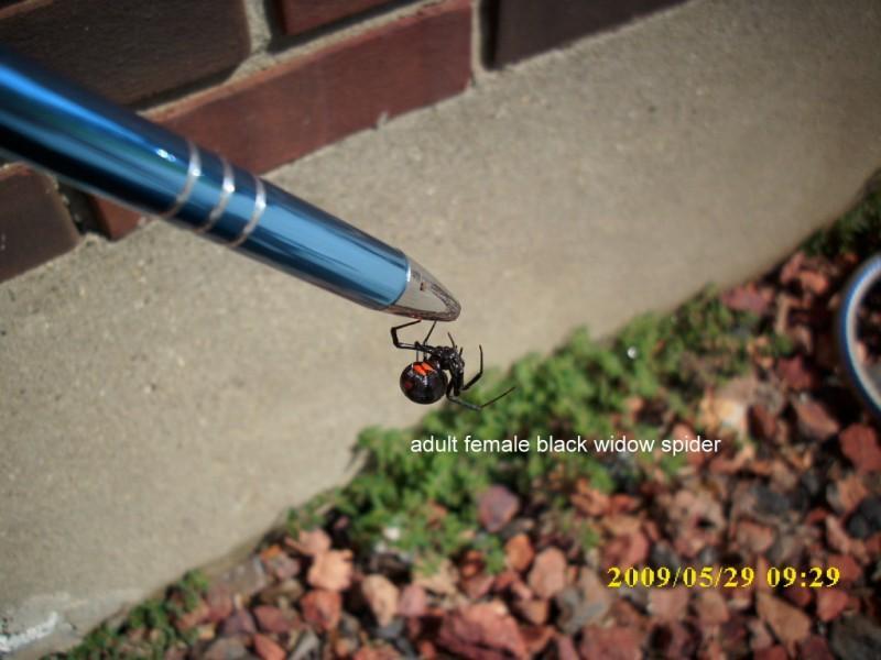 Swat Team Pest Control Louisville Ky 40272 502 296 2402