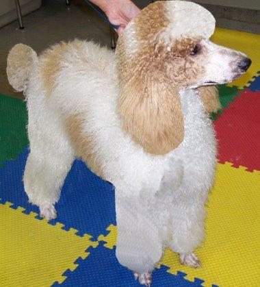 Pampered Pet Grooming And Dog Training Inc Champaign Il