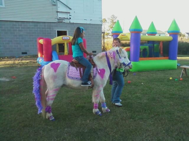 Pony Car Rental
