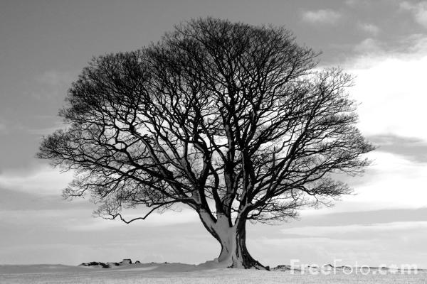 black and white tree photos. 15_01_33---Tree-Black-and-
