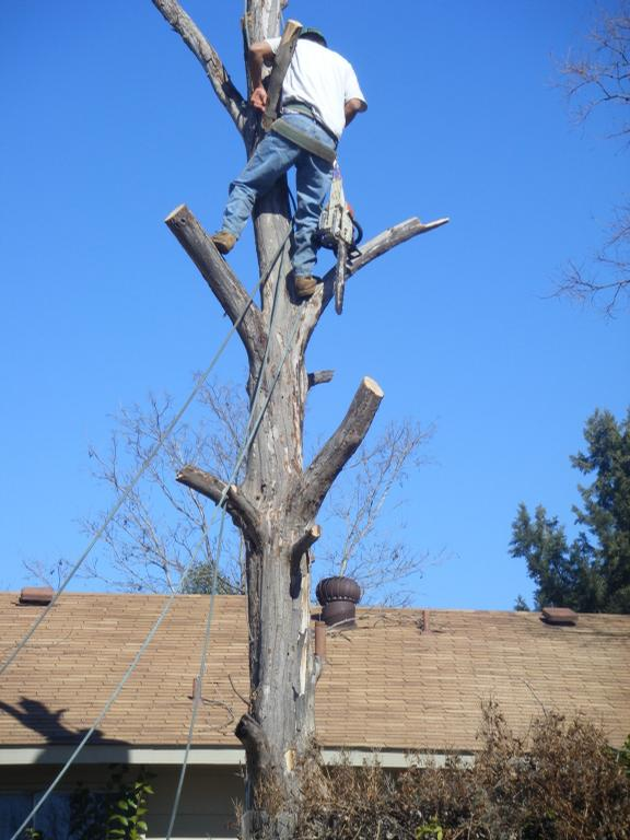 Tree Professionals Of Dallas Dallas Tx 75203 469 324 8474