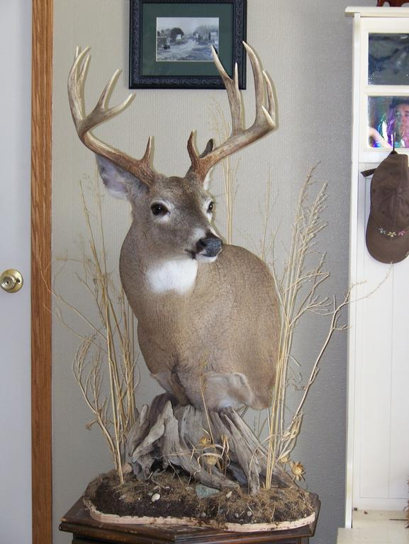 piedestal dex ~ pictures for willow grove taxidermy in ennis, mt 59729