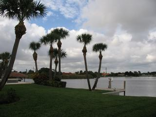 Tropical Tree & Landscape - Boynton Beach, FL