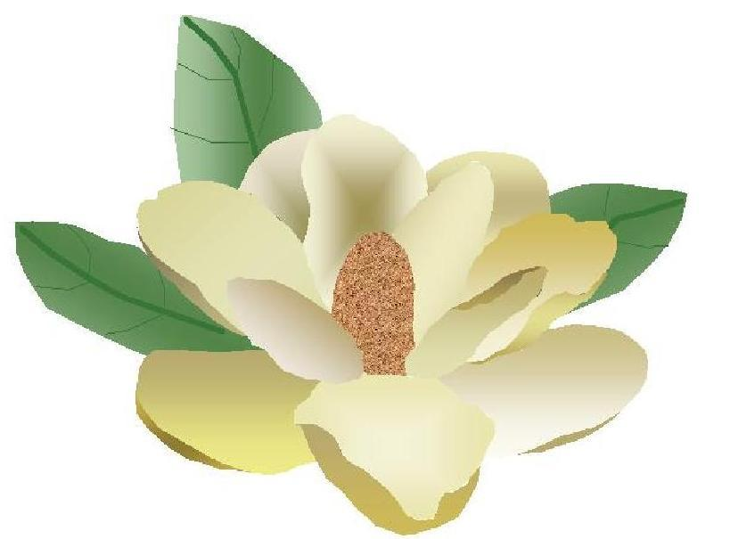 Brochure Magnolia Flower From King Kleaning Of In