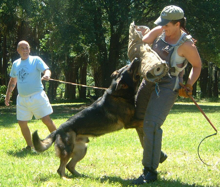 Dog Obedience Training New Smyrna Beach