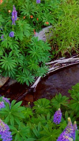 From natural ponds streams and lakes by for Natural pond plants