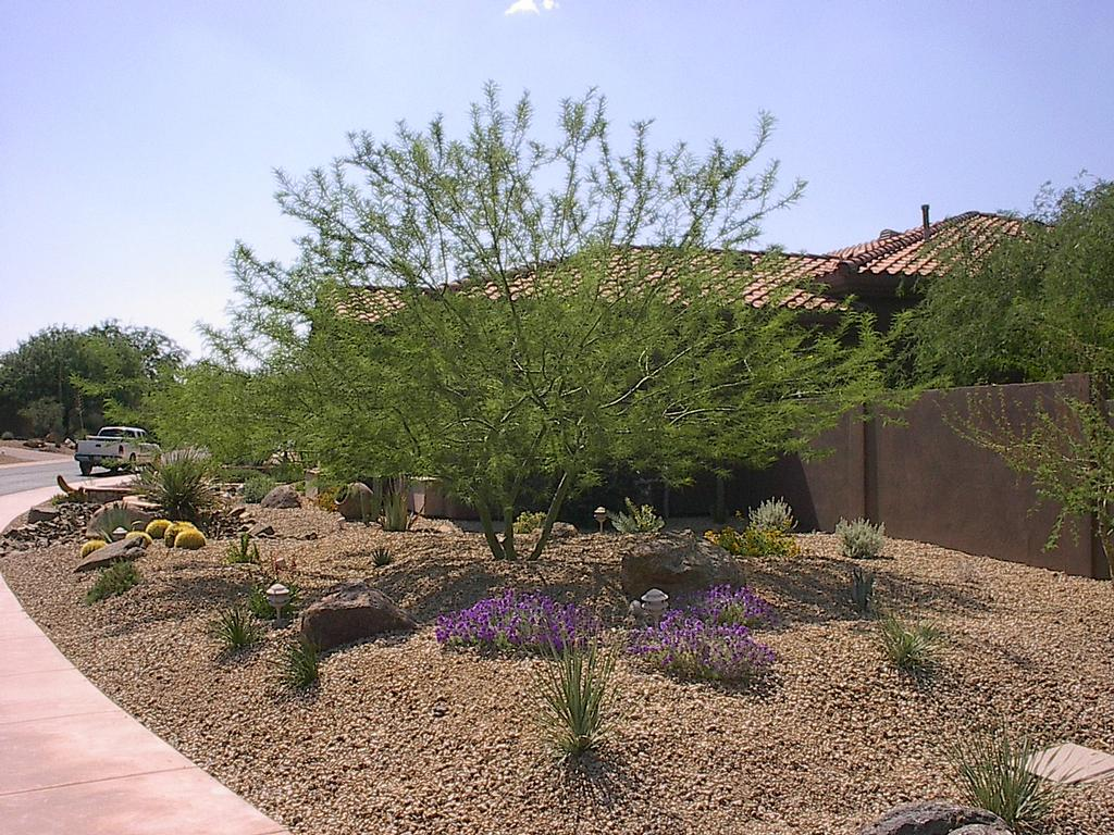 Landscape creations of arizona phoenix az 85086 623 for Landscaping plants