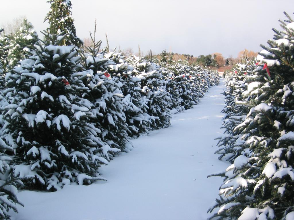 christmas tree farm milwaukee wisconsin