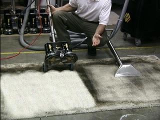 Tampa Carpet Cleaner.jpg