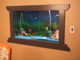 Blogs fox design studio in canandaigua ny 14424 for Fish tank built into wall