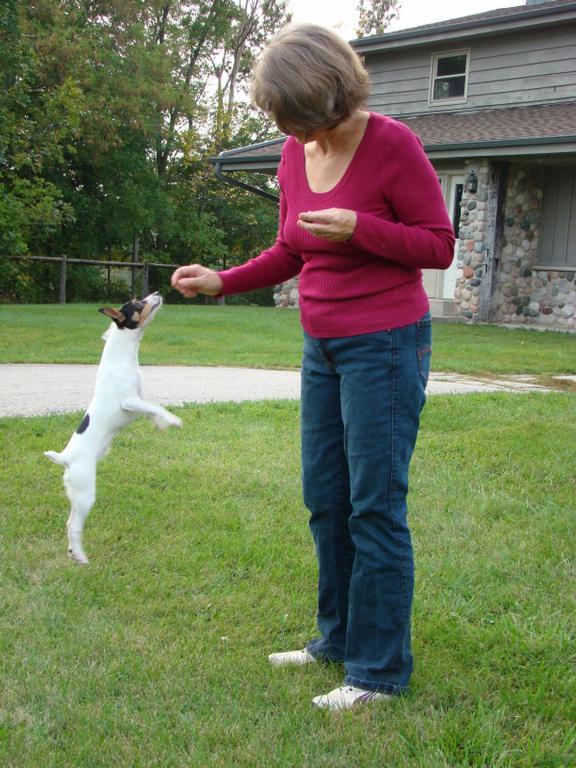 Dog Training Brookfield Wi
