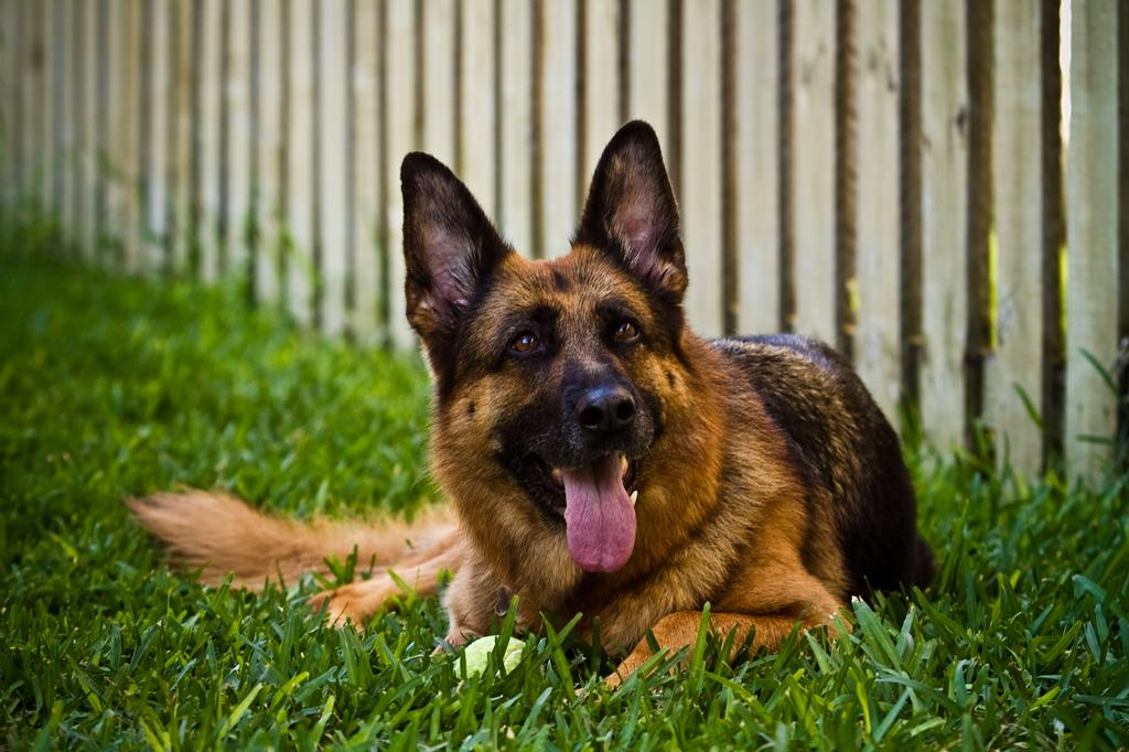 10 Best Dog Behavior Trainers In Palm Beach Gardens Fl