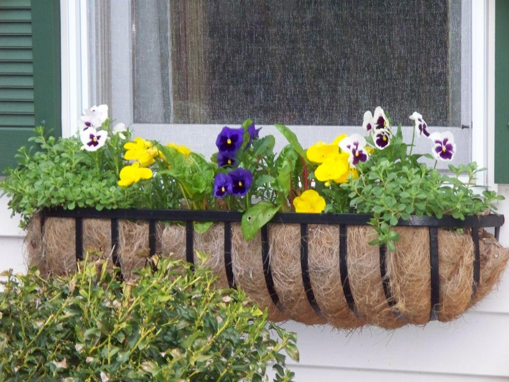 Planter Box Plants Full Sun,Closet Shoe Cubby Plans,fine woodworking ...