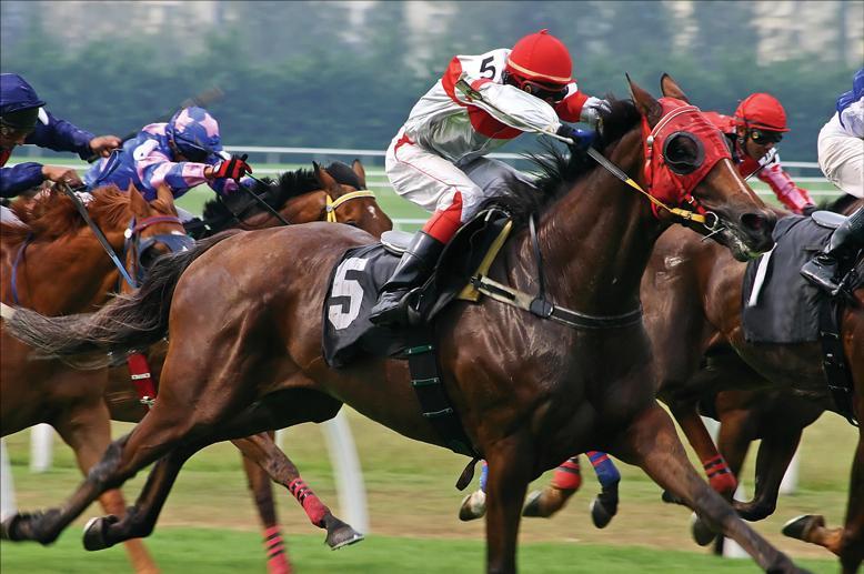 horse race jpeg projector_logo by reverse raffle