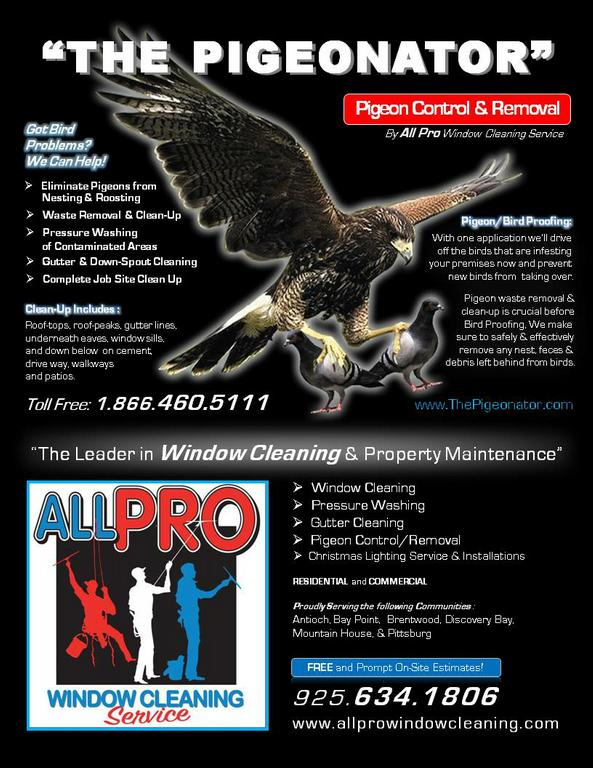 All Pro Window Cleaning Gutter Cleaning Pigeon Control