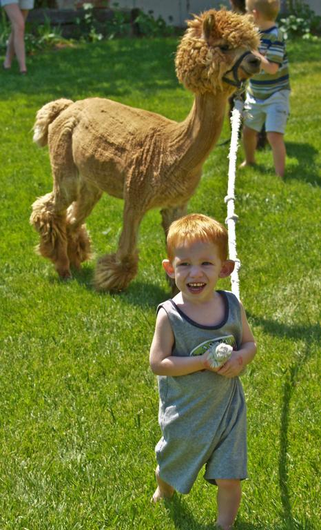 Pictures for Tumbleweed Alpacas in Grand Junction CO 81504