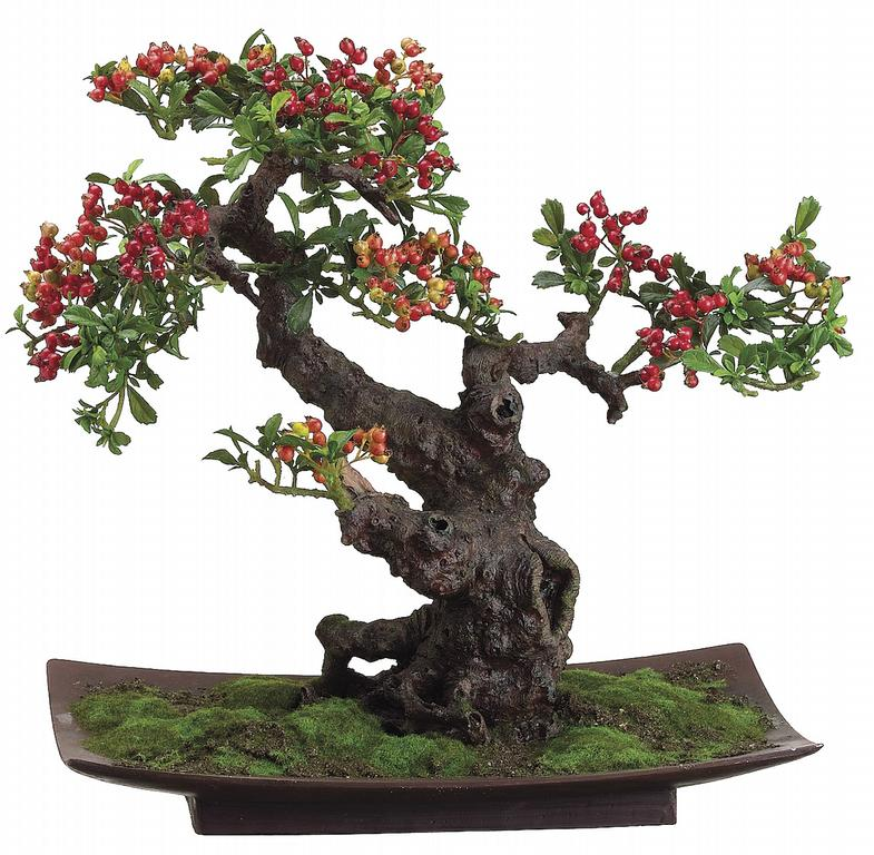 Lpb432 Pyracantha Bonsai 20 Inch In Resin Pot Jpg From