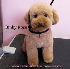 Pink Pucci Dog Grooming - Torrance, CA