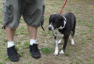 Dogma Dog Care - Smyrna, GA