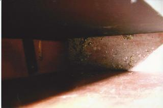 ROACHES FROM NEIGBOUR APT.jpg provided by Concord Management LTD Orlando ...