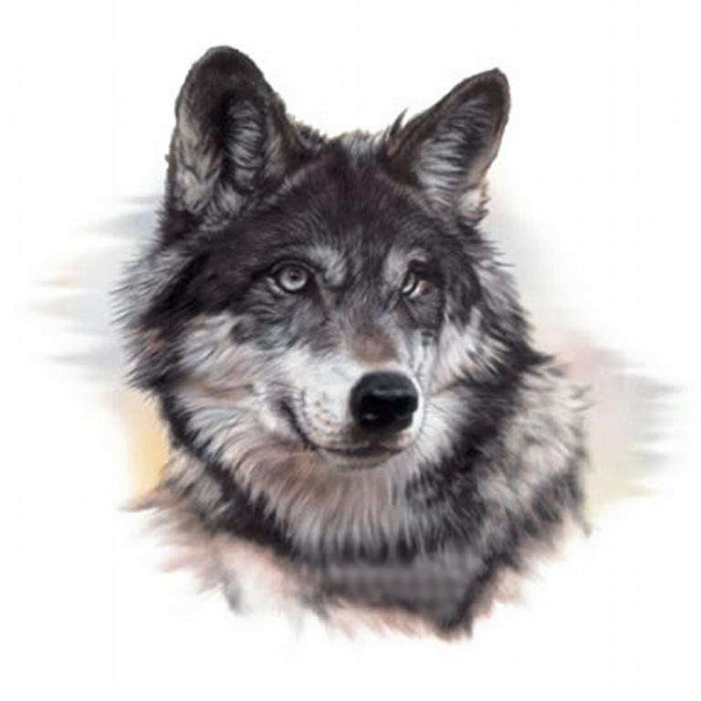 Wolfs Den Rustic Outlet Glenpool OK 74033 918 321 9653