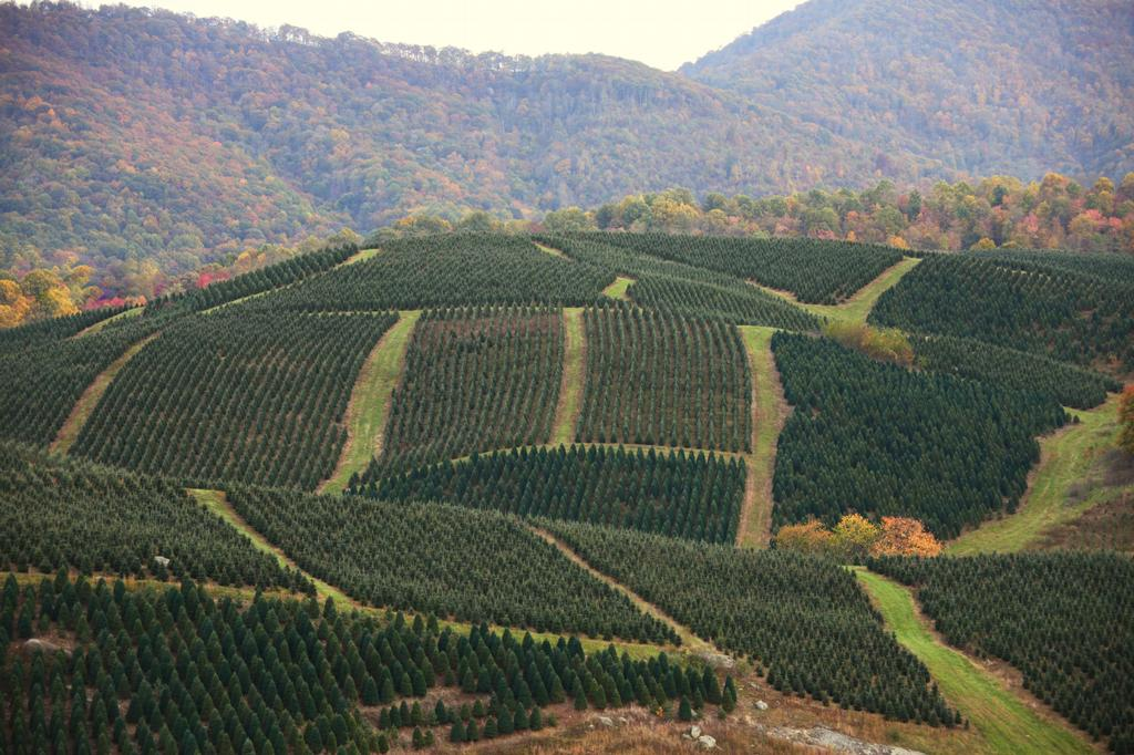 Severts Tree Farm - Hill Top wide shot - Picture 1 from ...