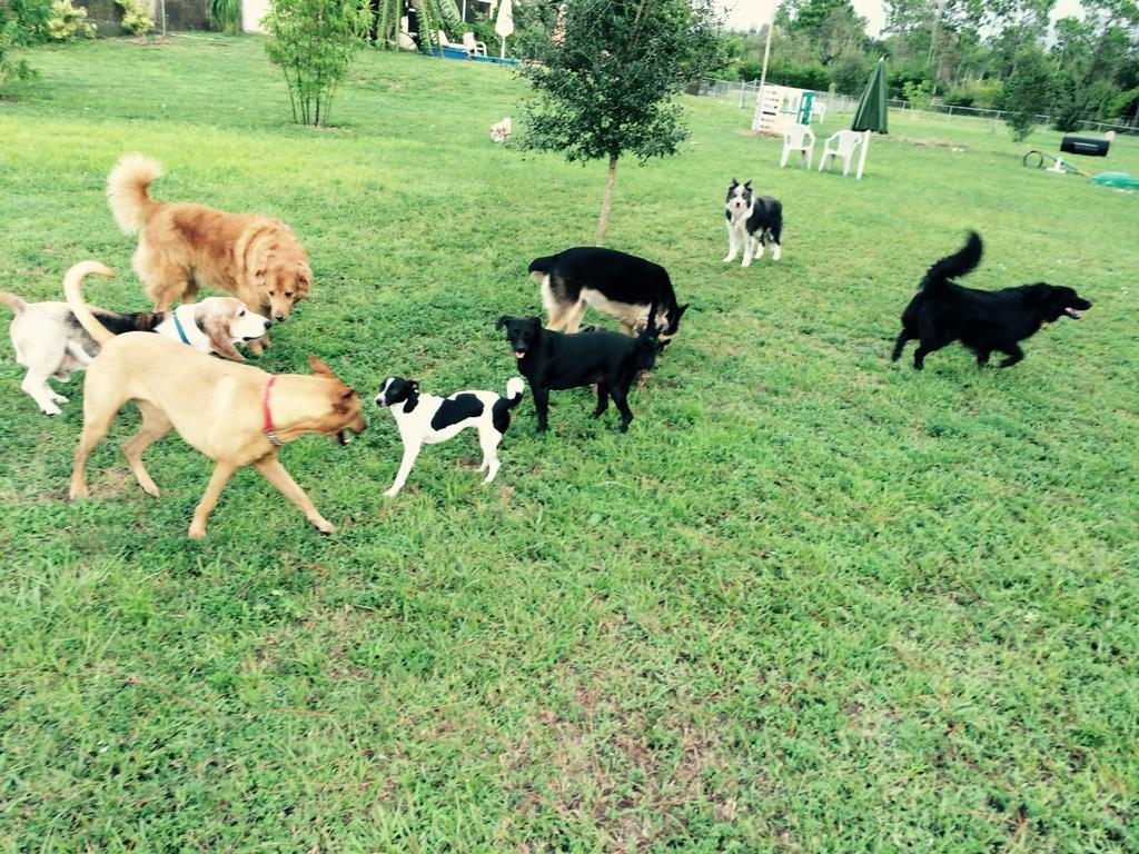 Dog Boarding In North Fort Myers