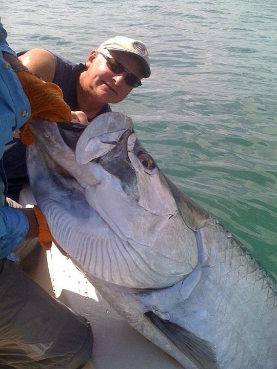 Tarpon ponce inlet from fishing guy in new smyrna beach for Ponce inlet fishing