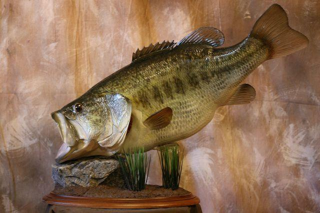 Fish Scale Taxidermy Waco Tx 76710 254 235 2370