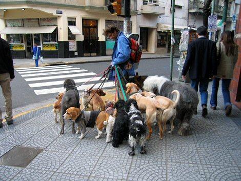 Walks Near York Dogs