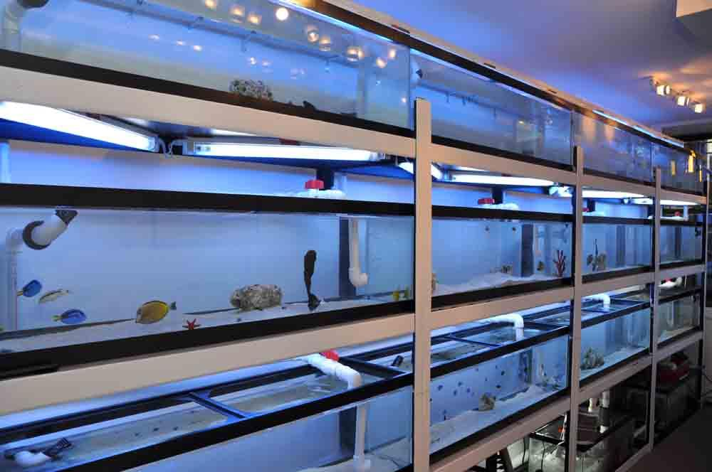 Bluestar inside pic from bluestaraqua fish coral saltwater for Salt water fish store
