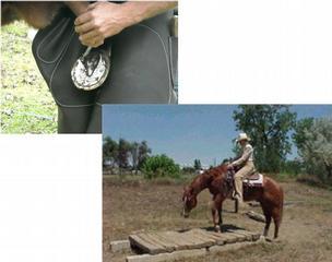 Horse Training Amp Farrier Apprentice Program Tylertown Ms