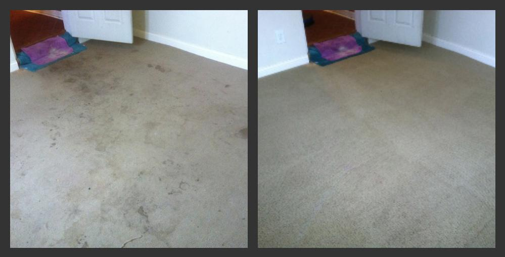 Wizard Carpet Amp Rug Cleaning Lexington Ky 40514 859