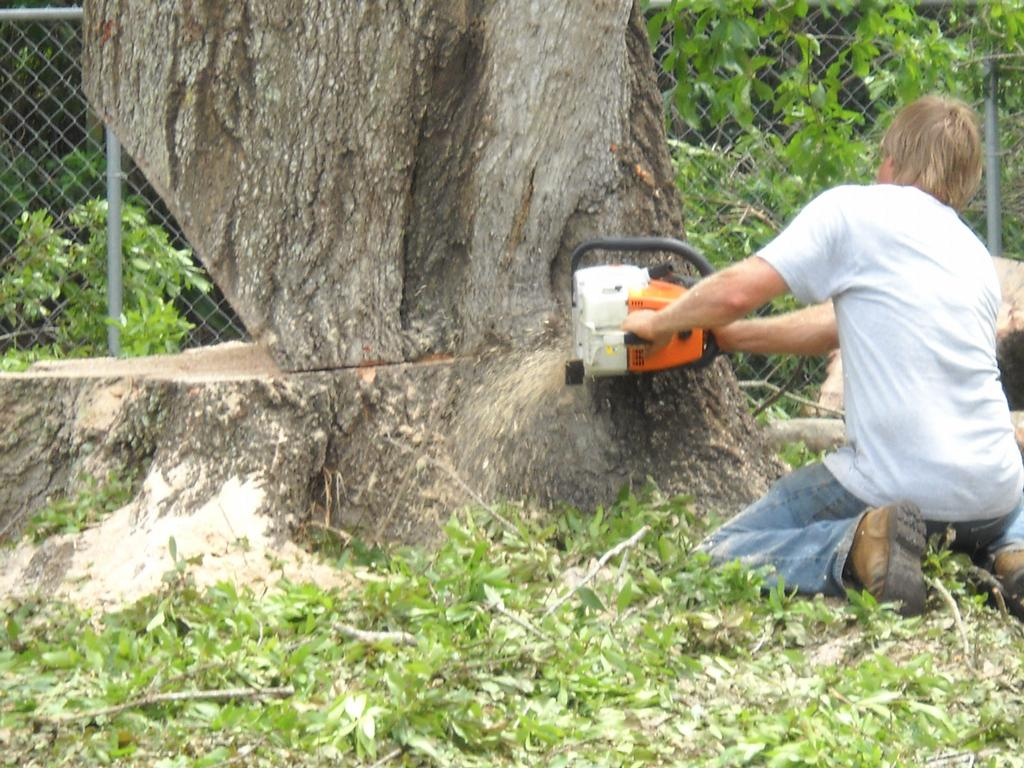 how to clear lots of tree stumps
