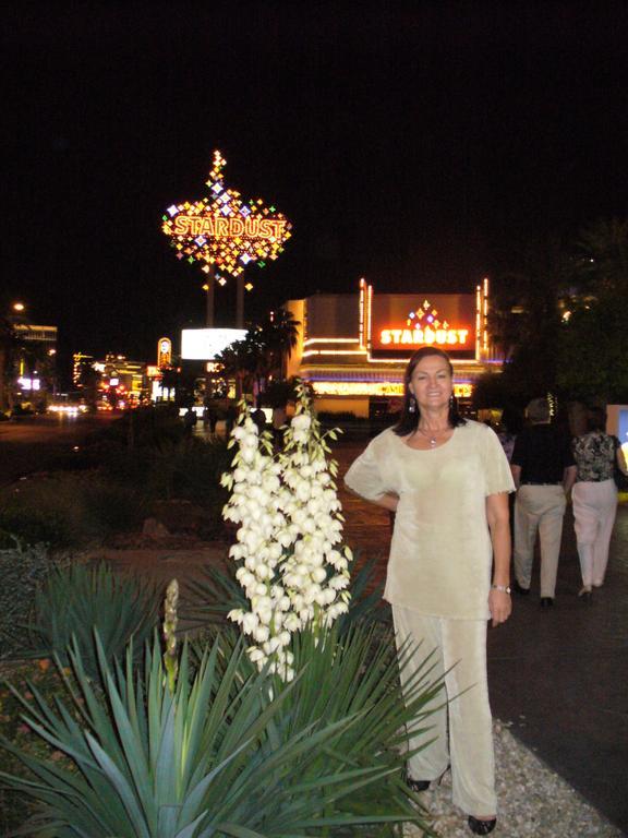 Strip clubs near knoxville tn