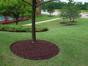 Pictures for sunshine landscaping co in cherry valley ma for Tree edging border ideas