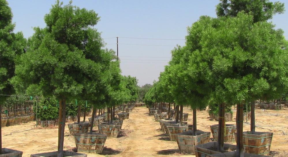By Tex Trees Nurseries