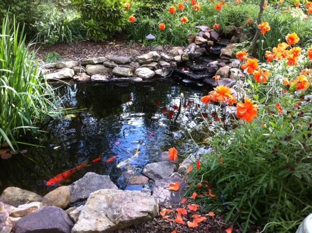 Cross house garden inn weyers cave va 24486 540 234 8065 for Koi ponds near me