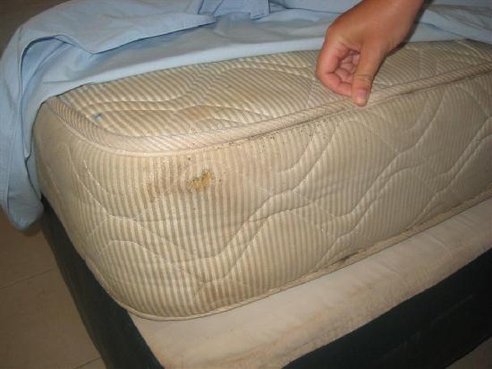 Bedbug Feces