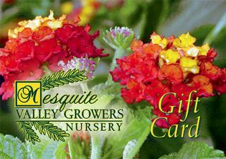 Mesquite Valley Growers - Tucson, AZ
