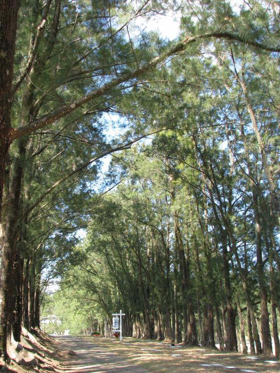 Florida wellness and rehab tampa fl 33602 813 229 2225 for Jardines del recuerdo
