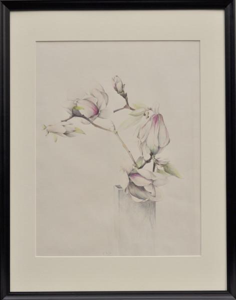 Orchid Plant Drawing Description Orchid Plant