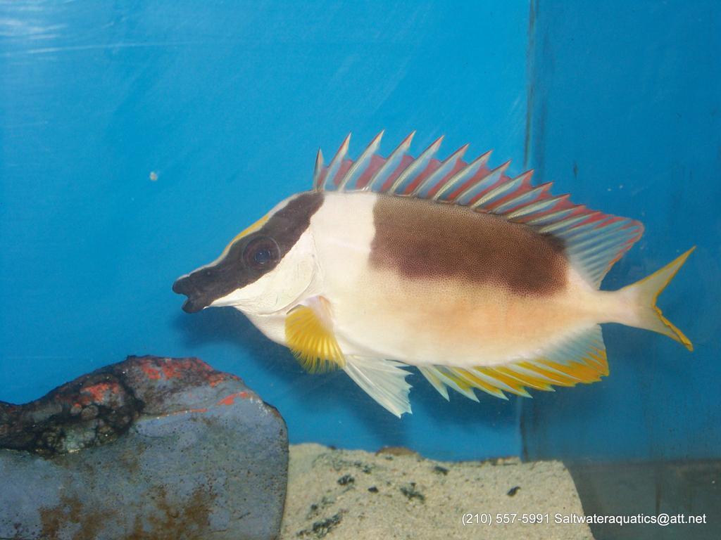 Salt water fish for sale san antonio san antonio tx for Brackish water fish