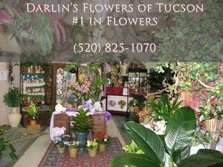 Darlin's Flowers - Tucson, AZ