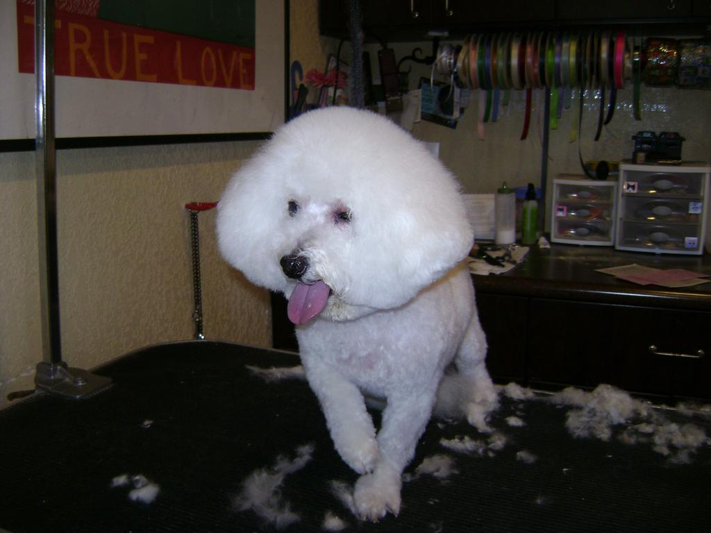 Best Dog Groomer In Mesa Az