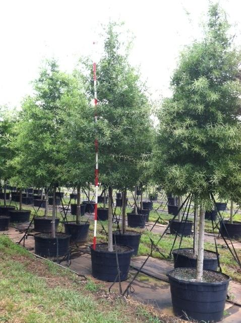 Drees Plant Wholesalers Maryville Tn 37803 865 438 4490