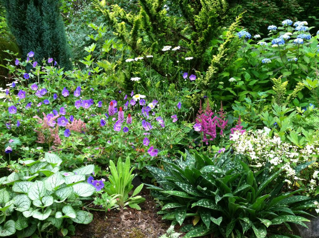 shade garden from perennial passions garden design and