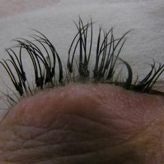 Will Eyelash Extensions Damage Your Real Lashes 26