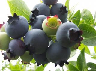 Rose's Berry Farm, LLC - South Glastonbury, CT