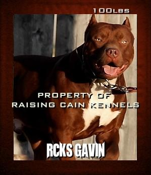 Real Estate Photos ⁓ Top Twelve Red Nose Pitbull Puppies For Sale In